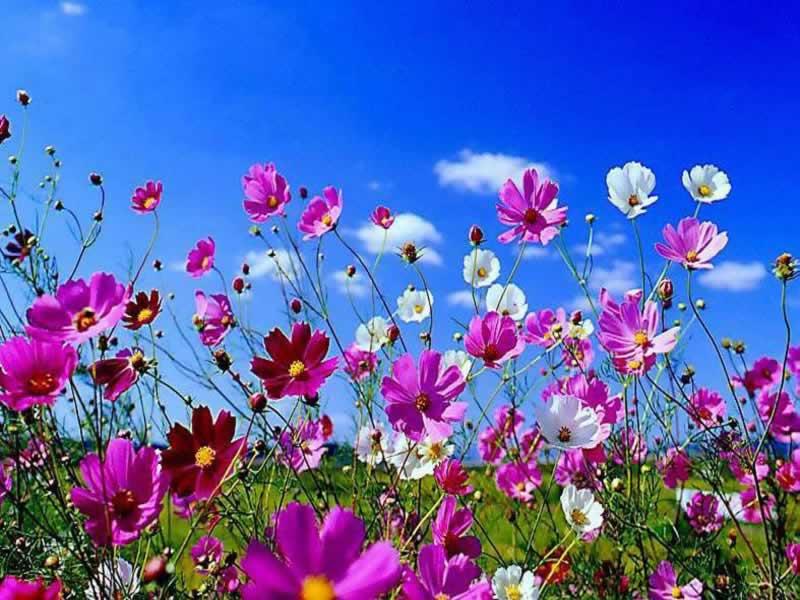 fiori sotto il cielo | A un passo dal possibile....